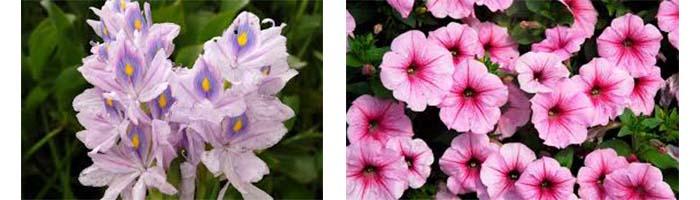 Nombres de flores Nombres de plantas comunes