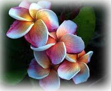 flores hawaii