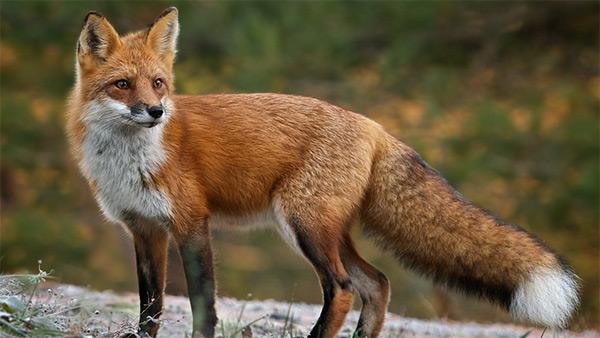 109 Best Animals Images On Pinterest: Todos Los NOMBRES DE ANIMALES Que Empiezan Por La Letra Z